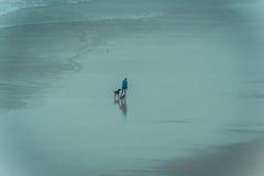 excersizing两条狗的赛跑者 图库摄影