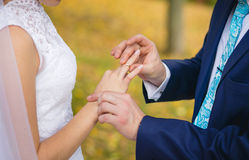 Exchange of rings in park Royalty Free Stock Image