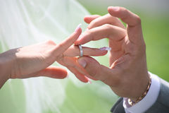 Exchange of wedding rings Royalty Free Stock Photos