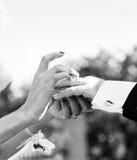 Exchange of wedding rings Stock Images