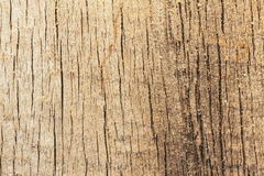 Excised acacia  and tree rings Royalty Free Stock Images