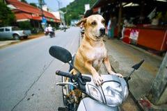 Excitador do cão Fotografia de Stock