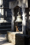 Excited baby monkey playing with an ancient bell. In Pashupatinath Temple, Kathmandu, Nepal. Rhesus Macaque monkey Macaca mulatta. Full of joy and excitement stock photos