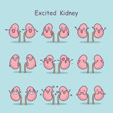 Excited cartoon kidney Royalty Free Stock Image