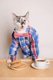 Excited cat in a shirt and bow tie drinking coffee with cookies. Cat in a shirt and bow tie drinking morning coffee with cookies Royalty Free Stock Photos