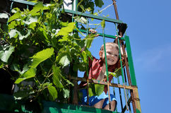 Excited little boy playing on an elevated patio. Hanging onto green metal railing alongside leafy vine with cheeky grin against blue sky Stock Photography
