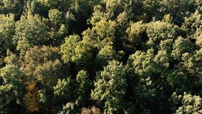 Aerial shot of the beautiful green wood in the Carpathian Mountains. Exciting bird`s eye view of a mixed leafy and fir wood with many green trees below having stock video footage