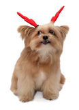 Exciting Dog Royalty Free Stock Photography
