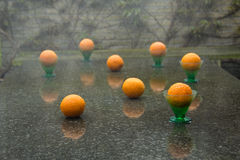 Exciting downpour and eight oranges. Garden, downpour and eight oranges in garden Royalty Free Stock Image