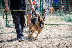 People with their dogs came to the training ground for the dog behavior tests. royalty free stock photo