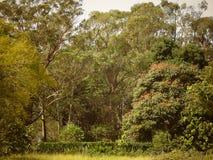 Exclusief bos waar ik werk stock foto