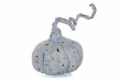 Exclusief met de hand gemaakt stuk speelgoed in de vorm van blauwe pompoen royalty-vrije stock afbeelding
