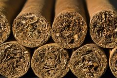 Exclusive Cigars. A macro photo of a bundle of cigars royalty free stock photography