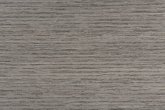 Exclusive Gray Oak Texture On Macro. Natural Background Closeup. Royalty Free Stock Photo
