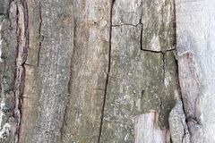 Exclusive natural pattern formed by deep cracks in pine wood decorated with green lichen. Outdoor. royalty free stock photos