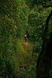 Excursão 2 do dossel Foto de Stock Royalty Free