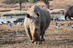 Excursão da manhã em Safari Ramat Gan Fotos de Stock Royalty Free