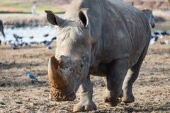 Excursão da manhã em Safari Ramat Gan Fotografia de Stock Royalty Free