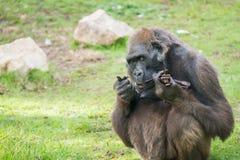 Excursão da manhã em Safari Ramat Gan Fotografia de Stock