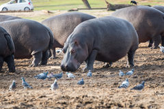 Excursão da manhã em Safari Ramat Gan Foto de Stock