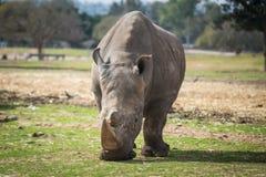Excursão da manhã em Safari Ramat Gan Imagem de Stock