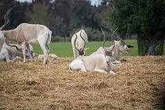 Excursão da manhã em Safari Ramat Gan Imagens de Stock Royalty Free