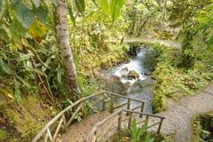 Excursão da selva imagens de stock royalty free