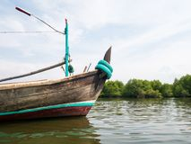 Excursão de Mangove do barco nos manguezais Forest Conservation imagem de stock royalty free