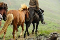 Excursão do cavalo em Islândia Fotos de Stock