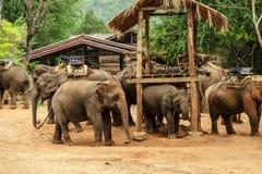 Excursão do elefante em Chiangmai, Tailândia Fotos de Stock Royalty Free