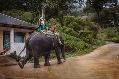 Excursão do elefante, Phuket - Tailândia Fotos de Stock Royalty Free