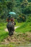 Excursão do Tailândia-passeio um elefante imagem de stock