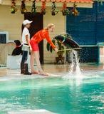 Excursão no aquário e no Tiger Zoo de Samui Fotografia de Stock Royalty Free