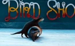 Excursão no aquário e no Tiger Zoo de Samui Imagem de Stock Royalty Free
