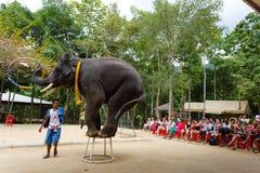 Excursión turística, demostración de elefantes, a Samui Imagen de archivo