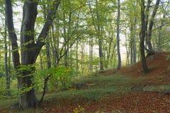 Excursie in het bos in de lente Stock Afbeelding