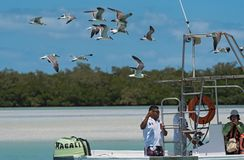 Excursion boat with tourists feeding at the gulls in the Holbox Laguna Conil, Mexico.  stock photos