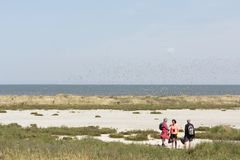 Excursion to tidal island Griend. Netherlands Stock Photos