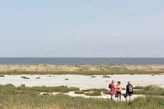 Excursion vers l'île de marée Griend Photos stock