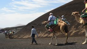 Excursions on camels stock footage
