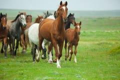 Exécution de chevaux Image libre de droits