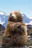 Execução do urso de Kodiak Fotografia de Stock