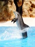 Executando o golfinho Imagens de Stock