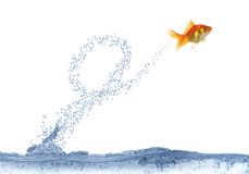 Executing after loop jump fish Royalty Free Stock Photography