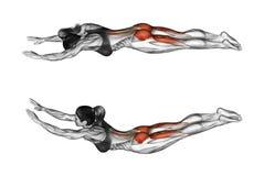 Exercício da aptidão O exercício gosta do superman fêmea