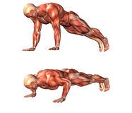 Exercício do homem do músculo Foto de Stock Royalty Free