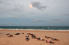 Exercício dos povos em Gold Coast Queensland Austrália Imagens de Stock Royalty Free
