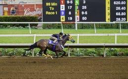 Exercício do cavalo de raça, Del Mar, Califórnia Fotografia de Stock Royalty Free