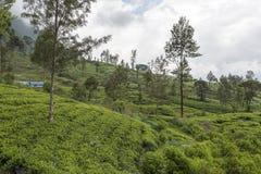 Exercez-vous sur le pont de neuf voûtes dans le pays de colline de Sri Lanka Images libres de droits