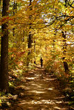 Exercice d'automne Photos libres de droits
